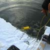 Survey fishes in a lake under ice